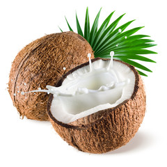 Coconut with milk splash and leaf on white background