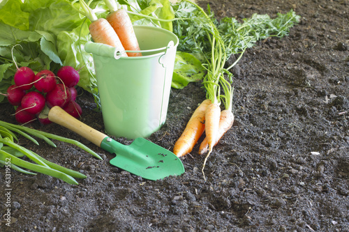 Fresh spring organic vegetables on the soil in the garden