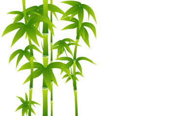 Green bamboo on white background