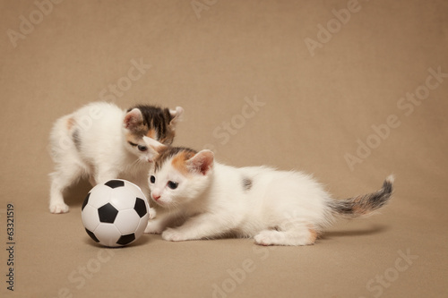 Two small spotted kitten plays with a football