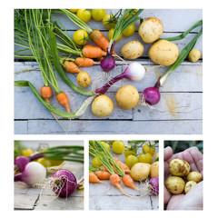 frisches Gemüse Collage
