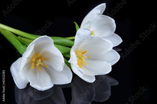 Beautiful bouquet of white tulips isolated on black