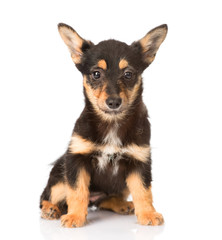 little puppy sitting in front. isolated on white background