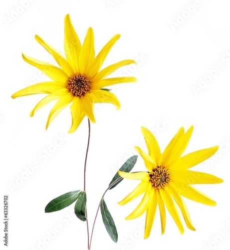 canvas print picture Yellow flower