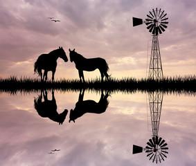 horses in the farm