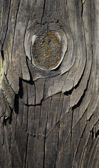 of  wood texture