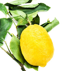 Lemon with green leaves isolated on white background close up. B