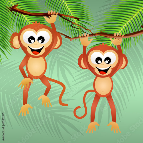 monkeys in the forest