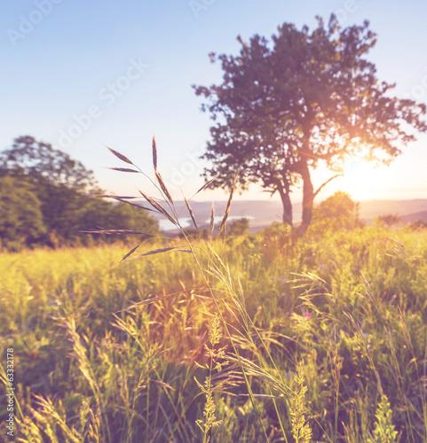 Meadow - 63332178
