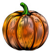 Pumpkin vintage woodcut illustration