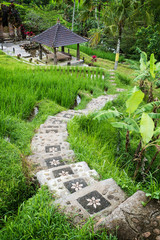 A shrine in the rice paddies of Bali, near Ubud, Indonesia