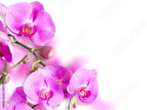 Orchid falenopsis.Seriya images.
