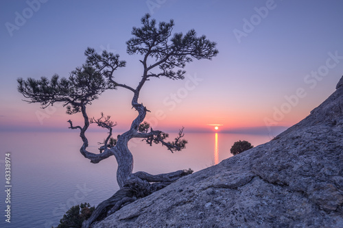 Plexiglas Zonsondergang Tree