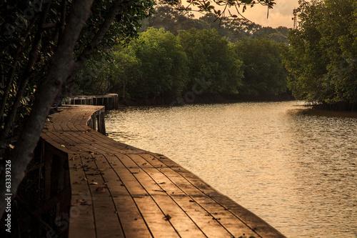 Mangrove forest with nature trails bridge © kimtaro2008