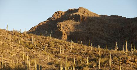 panorama of sonoran desert