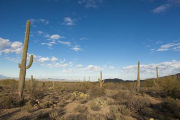sonoran desert at dawn