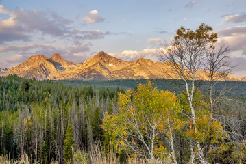 Fall trees on the Sawtooth mountains