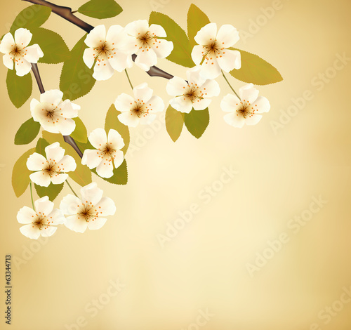 Vintage background with blossoming tree brunch and white flowers