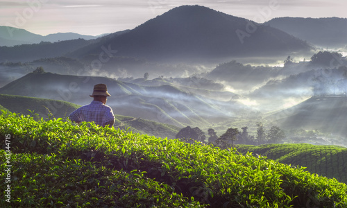 Farmer at Tea Plantation in Malaysia
