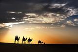 desert local walks with camel through Thar Desert