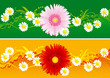 Vector floral banners with  blossoming flowers