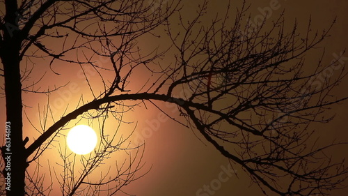 Beautiful sun at sunrise and tree branches. Time lapse