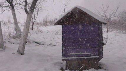 winter  snow falling on wooden beehive in garden