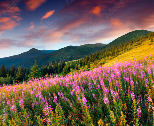 Beautiful autumn landscape in the mountains with pink flowers.