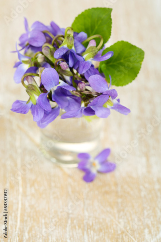 Violets flowers on blue background