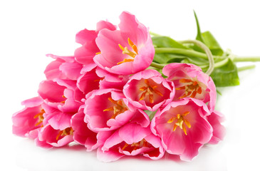 Pink tulips isolated on white