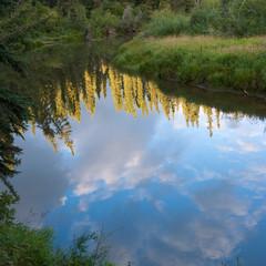 Taiga forest mirrored on Yukon mashland pond