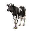 Standing cow isolated on white background