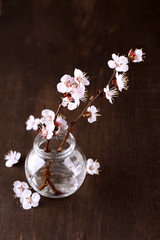 Beautiful apricot blossom in transparent jar