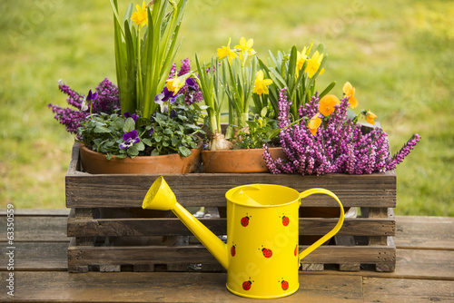 Spring flowers watering can