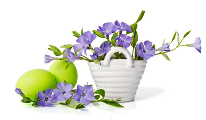 Beautiful blue periwinkle in the basket and green eggs isolated