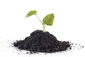 Tierra para plantas y hojas