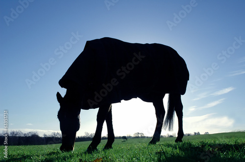 sunrise silhouette of a horse grazing in a meadow