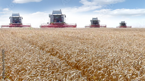 Four combine harvesters working on the wheat field