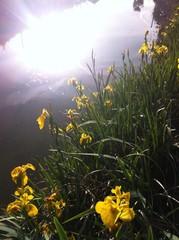 Flores de humedal