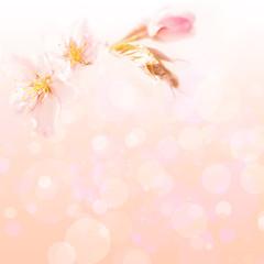 Spring flower background for design