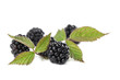 Fresh organic blackberries isolated on white background