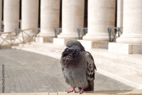 Pigeon sleeping in the San Peter Square, Rome, Italy