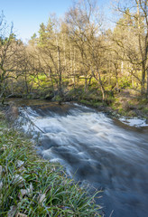 Weir in Yorkshire woodland
