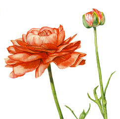 Watercolor with a Red flower