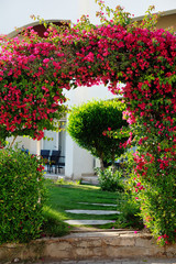 beautiful arch of red flowers