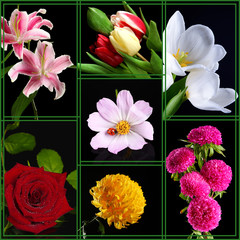 Collage of beautiful flowers on black background