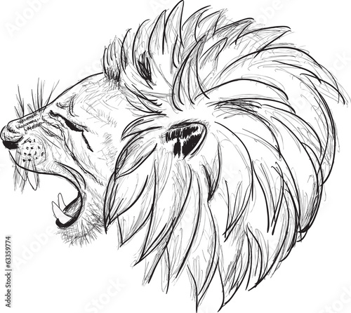 lion head sketch isolated on white