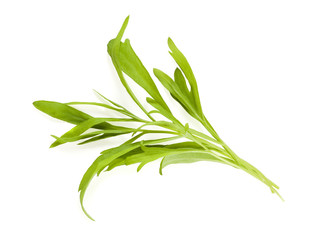 Tarragon leaves isolated