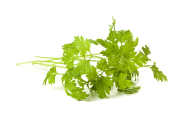 Chervil twig isolated