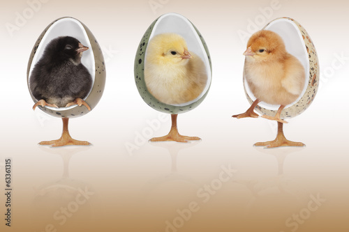 chickens in chairs brown background